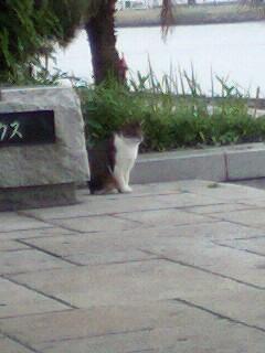 葛西臨海公園のネコ